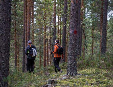 Rental cottage vuokramökki Saimaa nature trail luontopolku