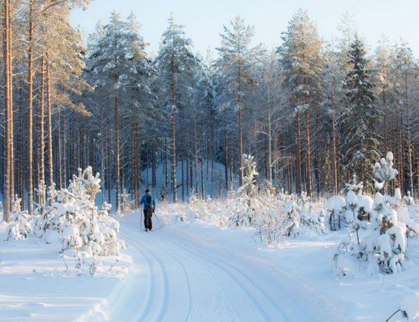 Rental cottage vuokramökki Saimaa cross country ski hiihto